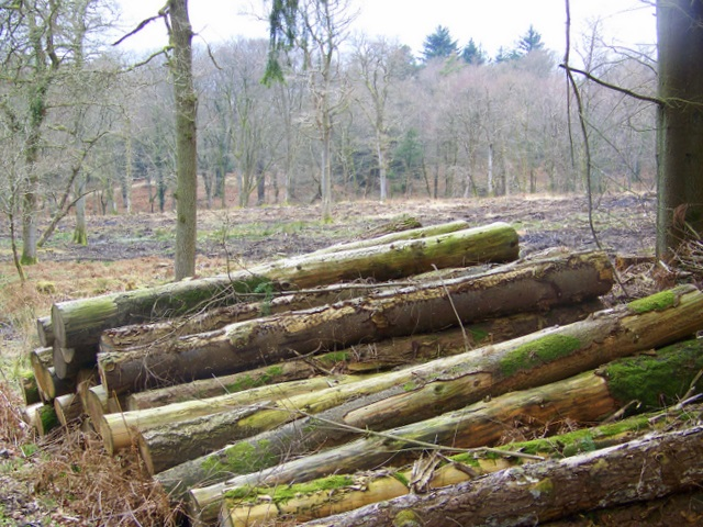 Log stack, Amberwood Inclosure