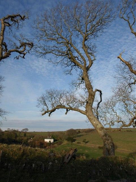 Trees near Coleton Farm
