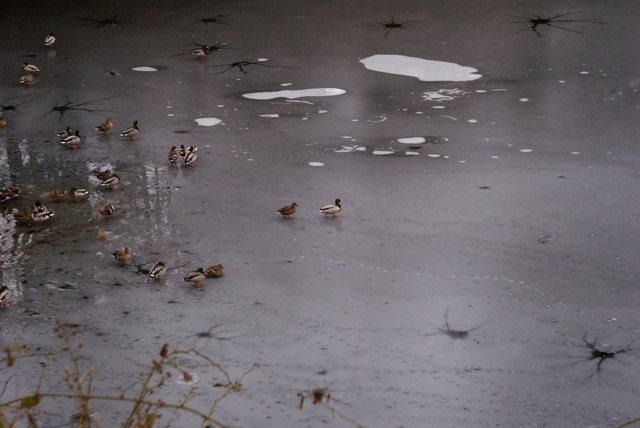 Ducks On the Frozen Ladybower Reservoir