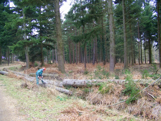 Timber clearance, Sloden Inclosure