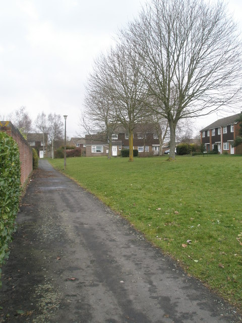 Trees in Bransley Close