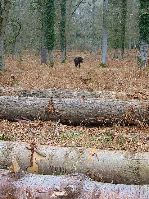 Pony within Sloden Inclosure
