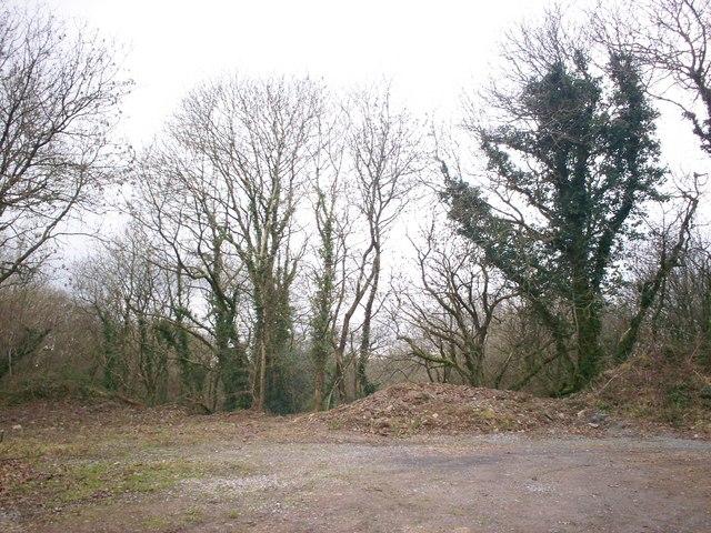 Top of Disused Quarry, Trenewydd Lane, Llanteg