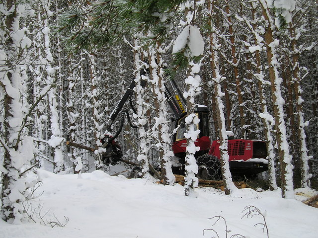 Timber Harvesting in Deep Snow