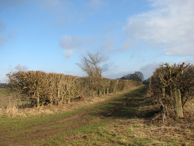 Hedge flanking farm track