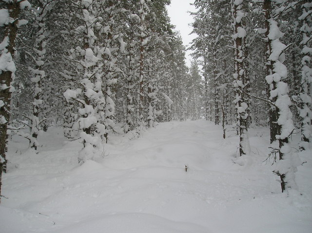 Deep Snow in the Forest