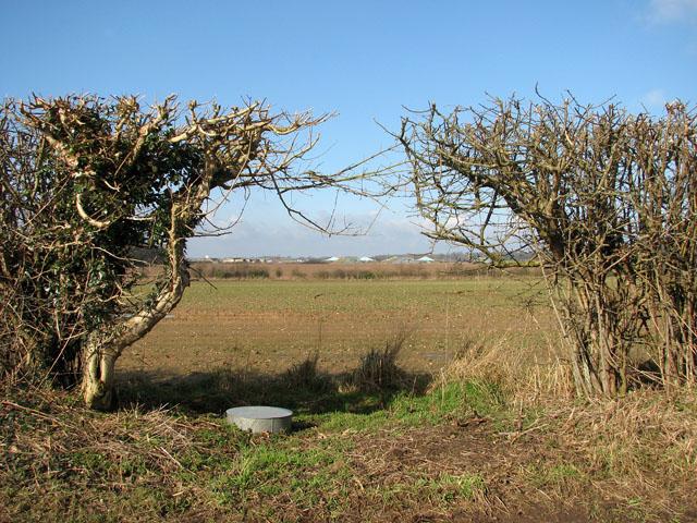 Gap in hedgerow