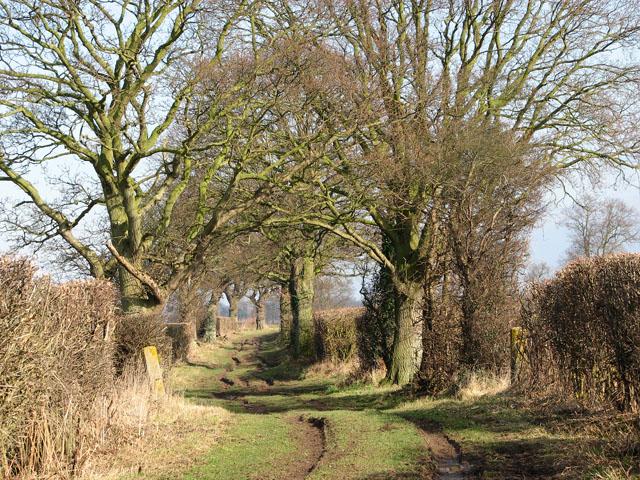 Tree-lined farm track