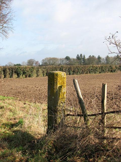 A hedgerow field boundary