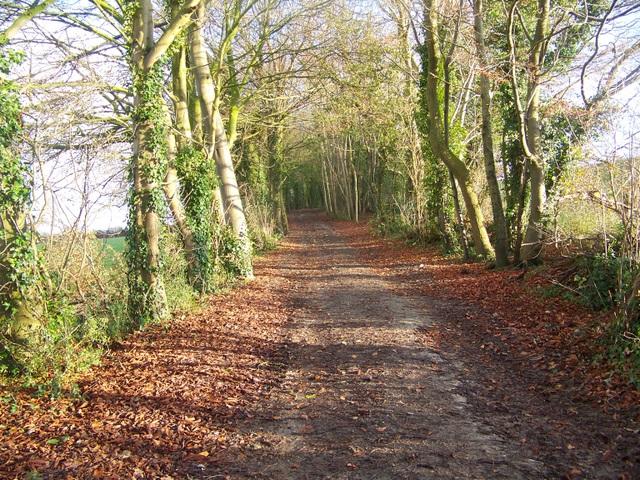 Avon Valley Path near Nunton