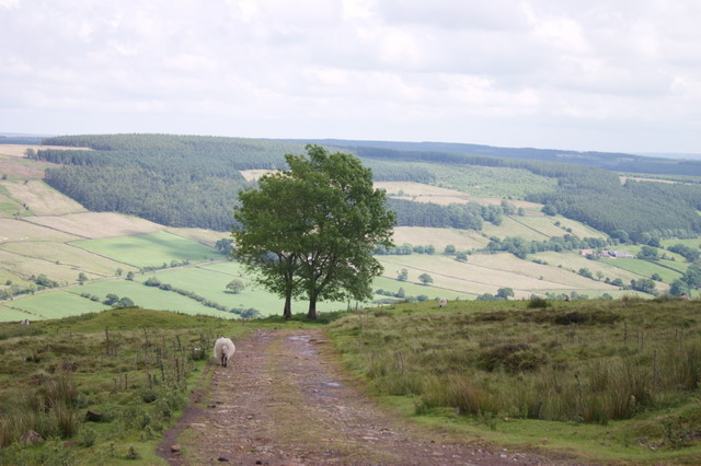 Track to Rosedale