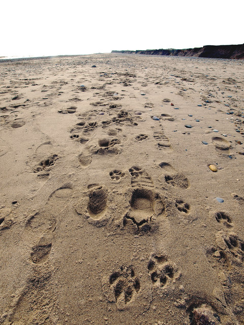 Foot and Dogprints on Kilnsea Beach