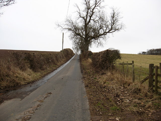 The country road, lined with rustic hedging, to Brownrigg Farm