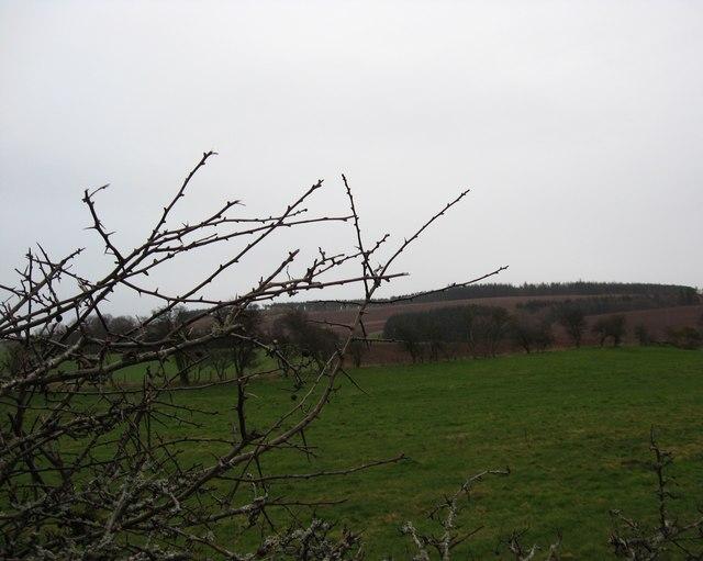 Farmland scene near  Crailing in the Borders