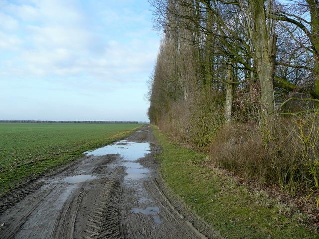 Muddy fenland track