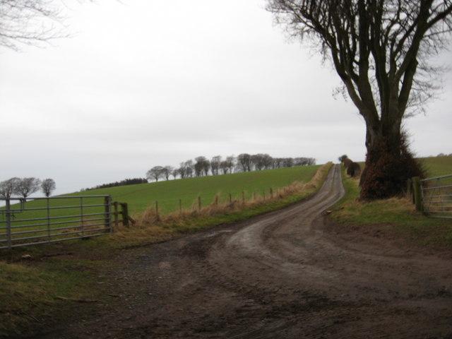 Road to Littledeanlees Farm