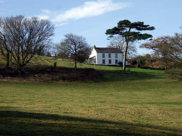 House with a Scots pine