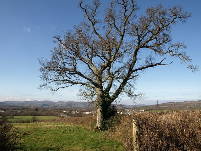 Oak and view near Sandslade Copse (2)