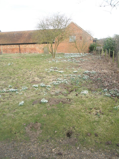 Snowdrops in the churchyard at Wisley Parish Church