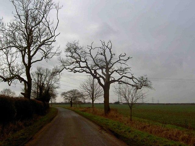 Trees on Skegby Road