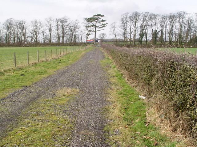 Lane to Caton's Farm