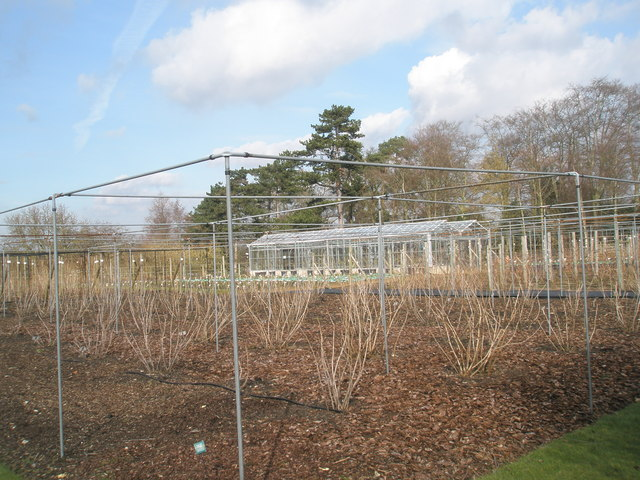Winter at the fruit cages within the Royal Horticultural Society Gardens, Wisley