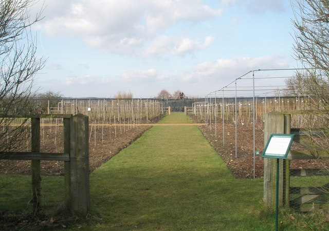 Looking from the orchard towards the Fruit Mount