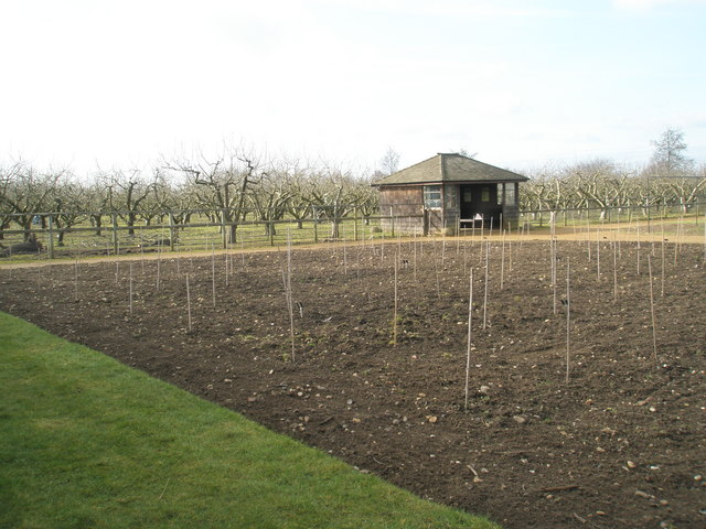 Winter in the orchard RHS Garden
