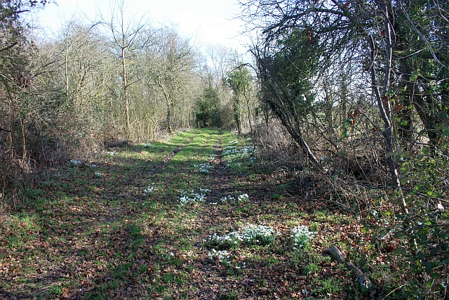 Snowdrops on the track