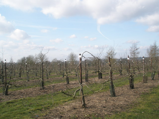 Developing species in the fruit fields at RHS Wisley