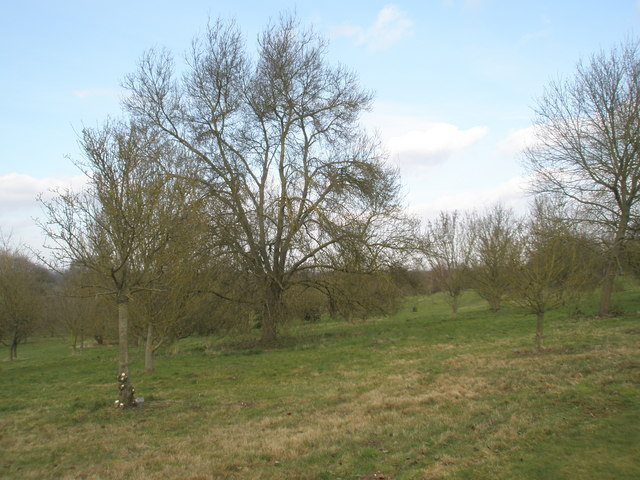 Winter in the Jubilee Arboretum