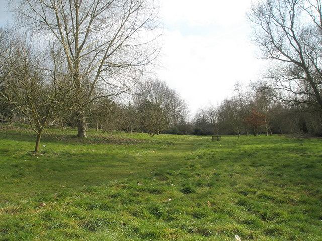 A verdant Jubilee Arboretum