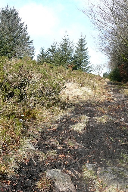 Footpath east of Bellever Tor