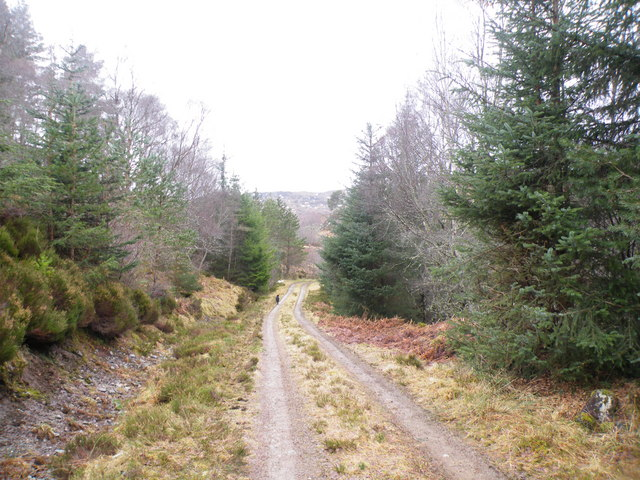 Track nearing end of Forest