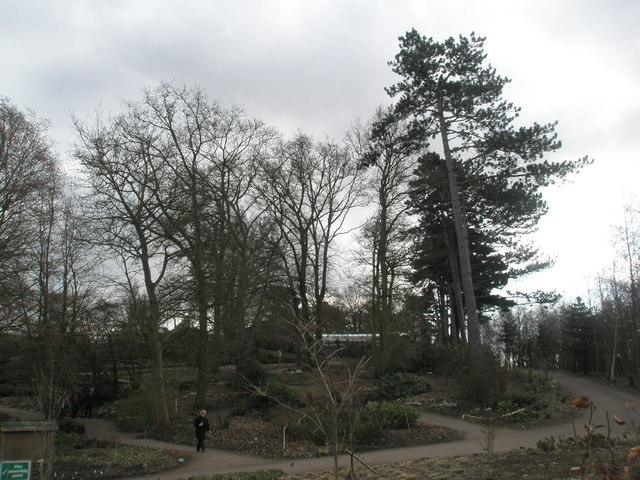 A winter scene approaching the wild gardens at RHS Wisley