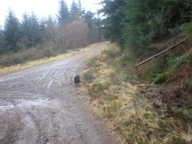 Start of Allt Saigh Track leaving Great Glen Way