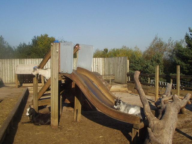 Goats on the Slide