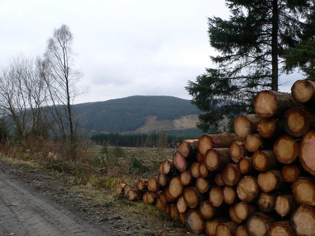 Timber stack, Gwydir Forest