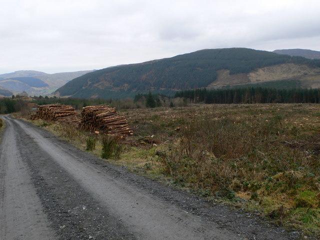 Clear fell and stacks, Gwydir Forest.