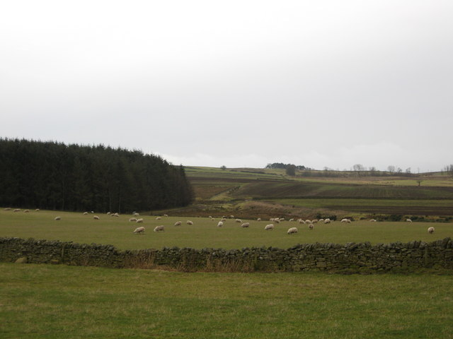 A peaceful scene in the Borders countryside