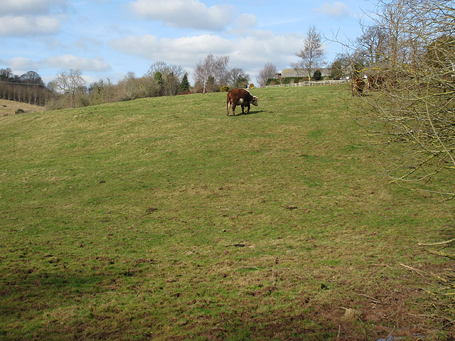 Hillside grazing at Phocle Green