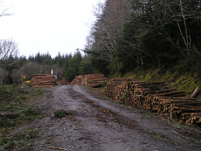 Logging in Brechfa Forest