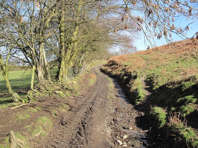 Footpath to Moel Arthur