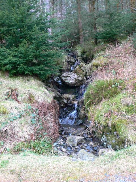 Small stream in the Gwydir Forest