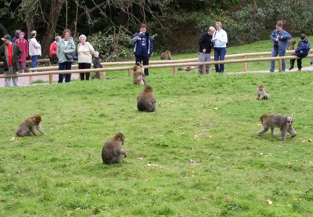 Monkey Forest at Trentham