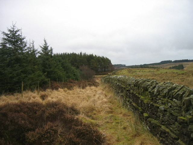 Bridleway at the southern edge of Wishaw Plantation