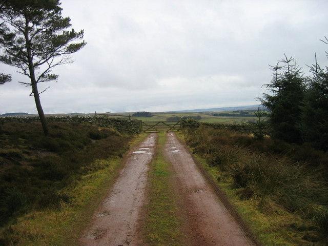 Forest road Wishaw Plantation