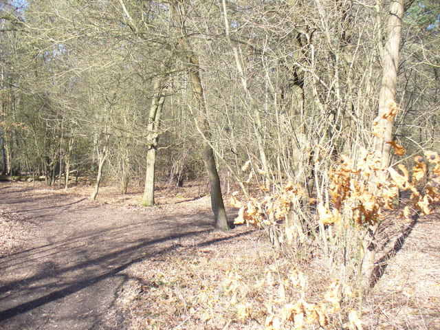 Woodland, Witley Common