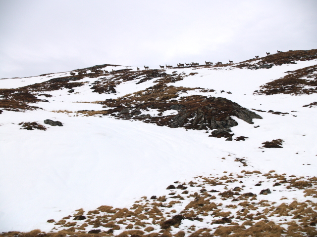 Herd of deer, Meall Feith Dhiongaig