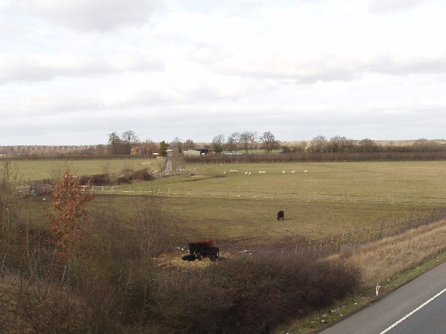 Cattle in field by the M40